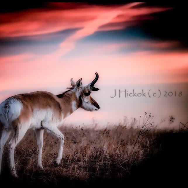 Black Hills - Dawn 02